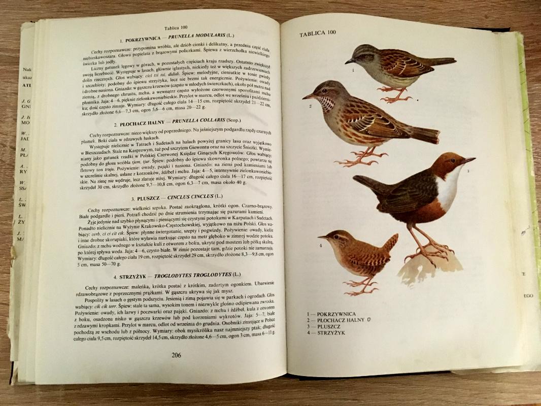 Wnętrze książki Atlas Ptaki Polski